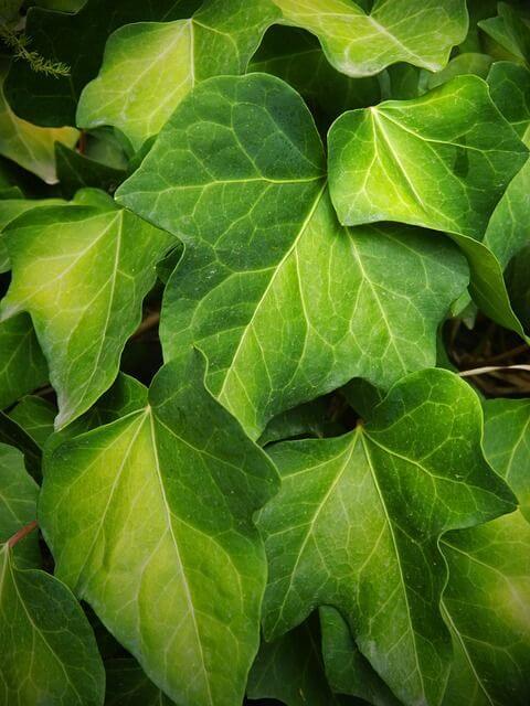 luftreiniger vs natur pflanzen zur luftreinigung luftwaescher test. Black Bedroom Furniture Sets. Home Design Ideas